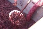 Winery_10